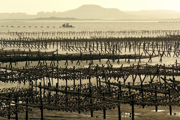 Seafood養成地