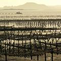 写真: Seafood養成地