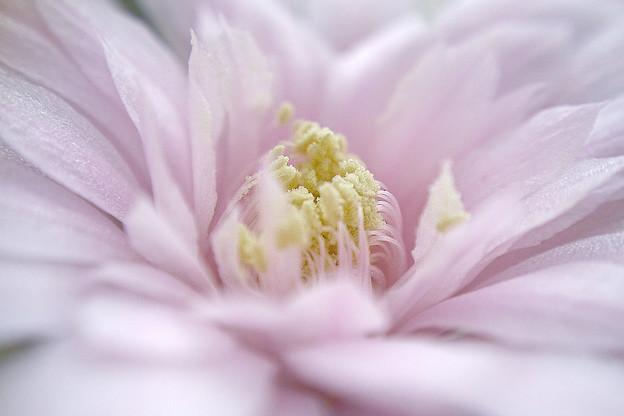 不知名的仙人掌花