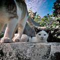 Photos: 地頭貓