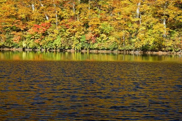 鎌池の神秘的な秋景色