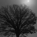 写真: 濃霧の朝 (1366x2048)