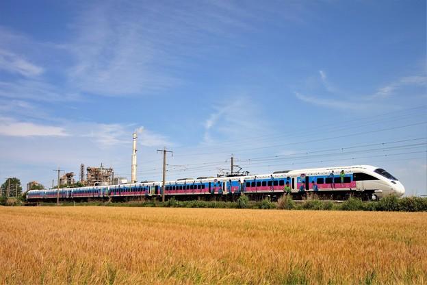 ラッピング列車と麦畑