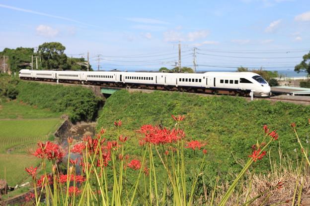 彼岸花と列車