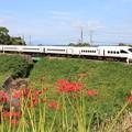 写真: 彼岸花と列車