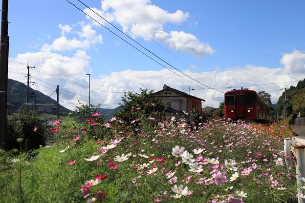 コスモスの咲く沿線