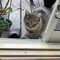 写真: たまに猫~モコちゃん