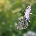 写真: 花のブランコ