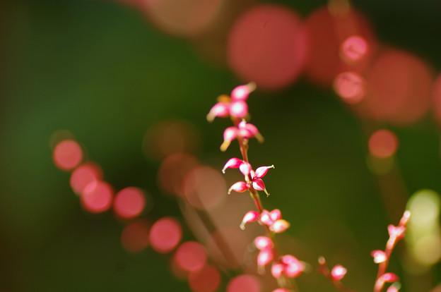 ピンクのネックレス