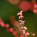 Photos: ピンクのネックレス