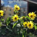 Photos: 夏の終わり