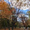 写真: 秋の終わり