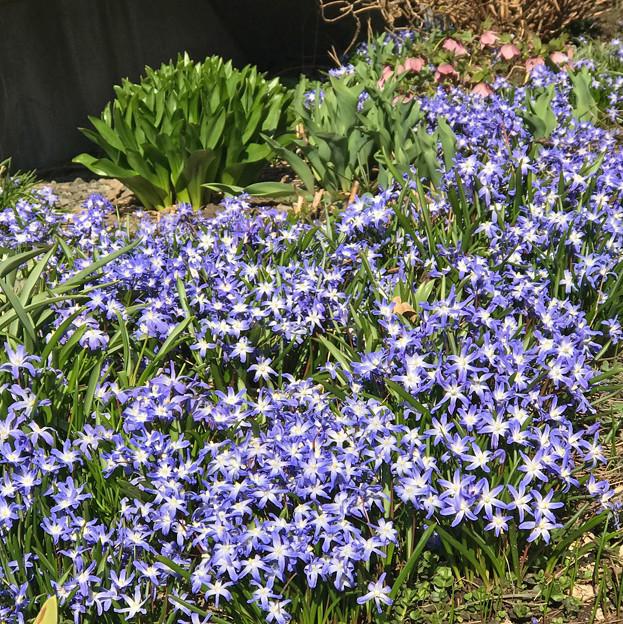 春の幕開け