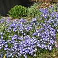 Photos: 春の幕開け