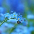 Photos: 青い庭