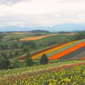 Photos: 色彩の丘