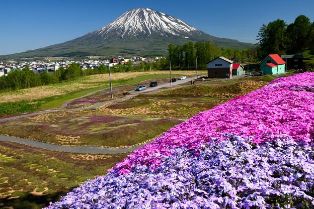 羊蹄山と芝桜。北海道
