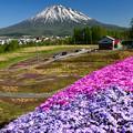 Photos: 羊蹄山と芝桜。北海道