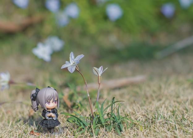 きれいなお花…。