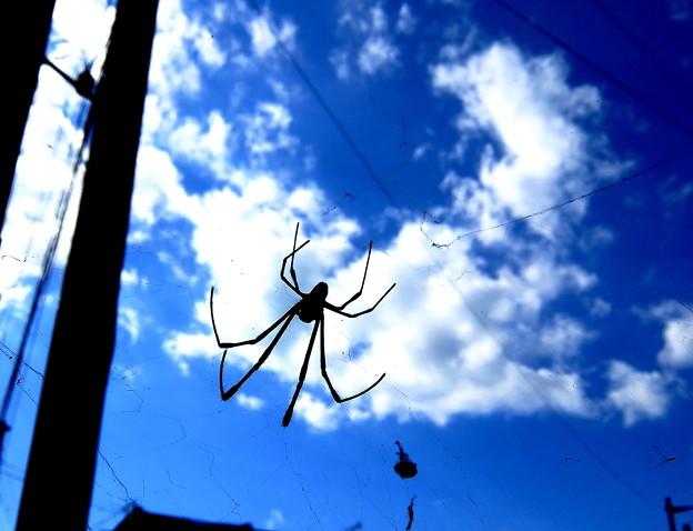 """~私は""""蜘蛛""""・・でも空を見上げれば""""雲""""が浮かんでるわ~(・。・;"""