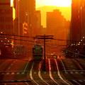 写真: 1)朝陽を浴びて~(MorningSun)