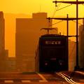 写真: 2)朝陽を浴びて~(MorningSun)
