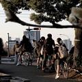 写真: 通学路に木蓮