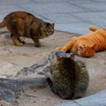今日2月22日は「猫の日」~(´艸`*)