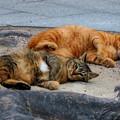 2)今日2月22日は「猫の日」~(´艸`*)