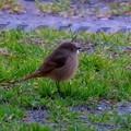 写真: Wild bird(野鳥)