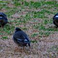 鳥のお尻みてもなぁ~~~~~~んもおもろない~うへへ~(´-ω-`)