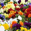 春が一杯~(´艸`*)