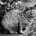 ヌコ~♪「野良猫の歌」だぜぇ~♪