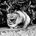写真: ヌコヌコ~♪♪「野良猫の歌」だぜぇ~♪