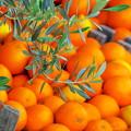 ~Orange~