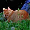 じつは広島にも「眠り猫」はいます~(´-ω-`)