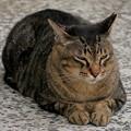 1~何気に猫Pasha!!~(´艸`*)