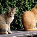 4~何気に猫Pasha!!~(´艸`*)