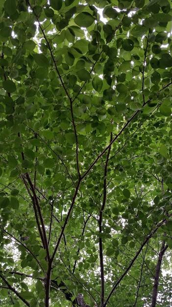 木漏れ日 4