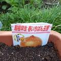 R元年度早生玉ねぎの種蒔