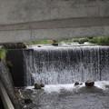 出合橋水量豊富