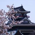 Photos: 清須桜