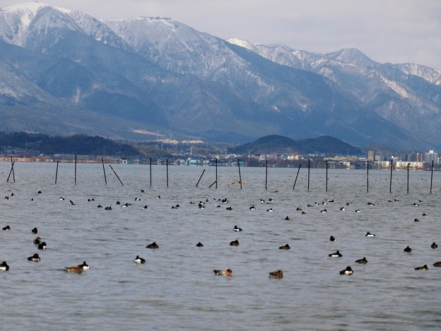 草津市湖畔(琵琶湖) A