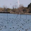 Photos: 浜辺のユ-トピア