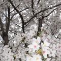 写真: 皇子山公園