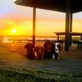 夕陽と西印旛沼と(≧∇ノ□ゝハイ、チーズ♪