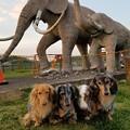 ナウマン象の親子と・・・
