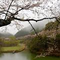 歌野川ダムの春
