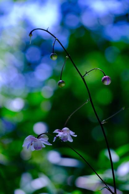 森の妖精さん