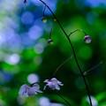 Photos: 森の妖精さん